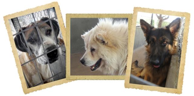 3 dog collage