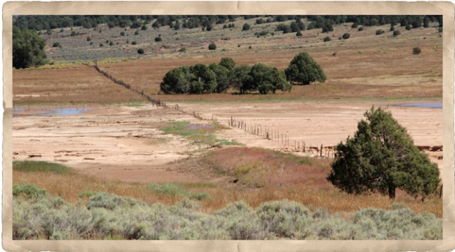 marsh fence 2