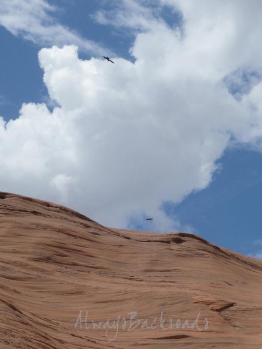 cliff cloud ravens 1