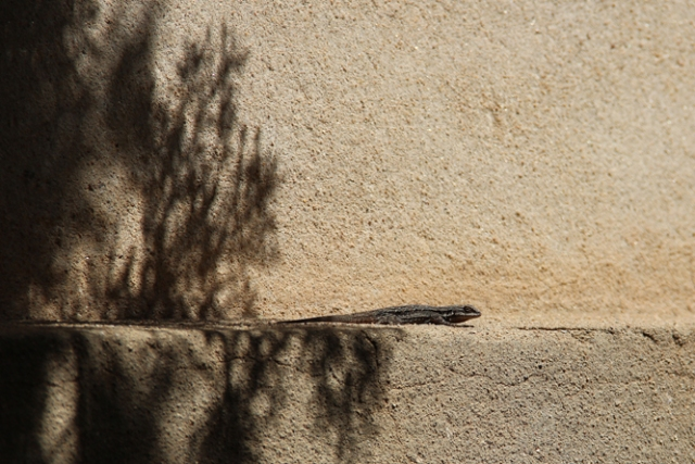 lizard on ledge