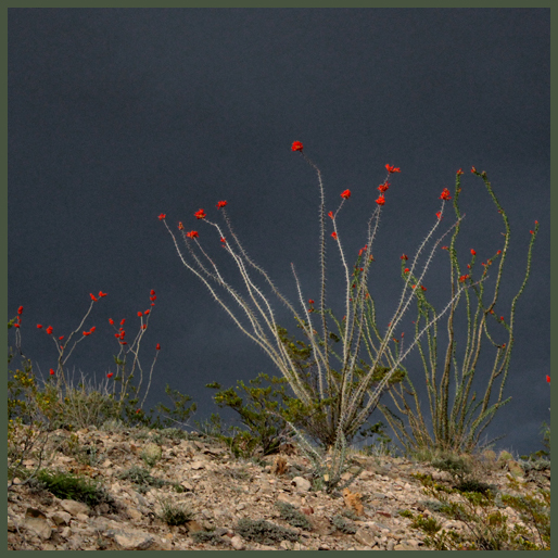 ocotillo dark sky b