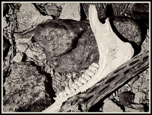 jawbone 1