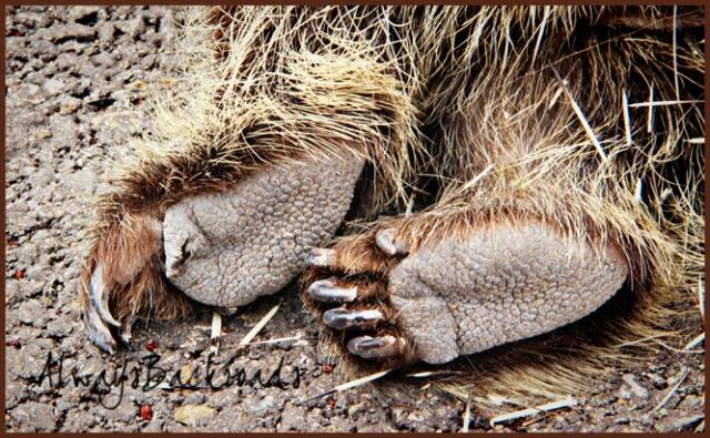 porcupine feet