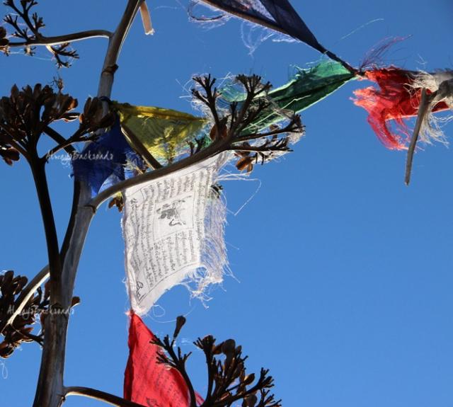 prayer flag yucca