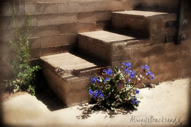 blue flower stairs