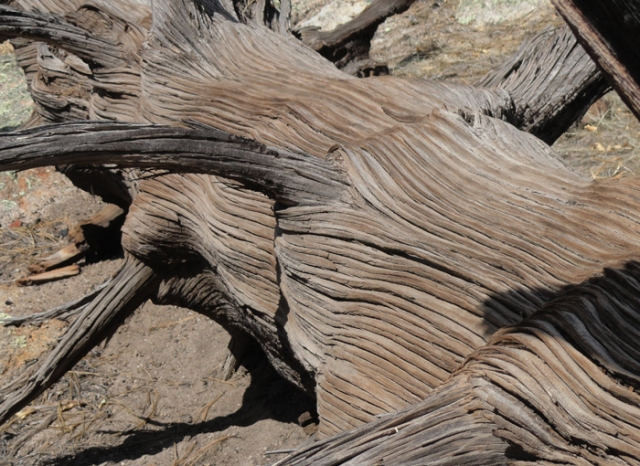 juniper wood 3
