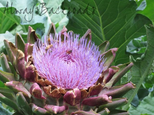 artichoke bees 1a