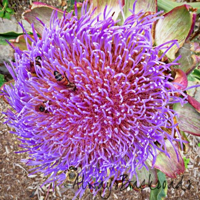 artichoke bees 2a
