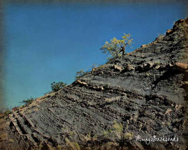 lone tree Mescal