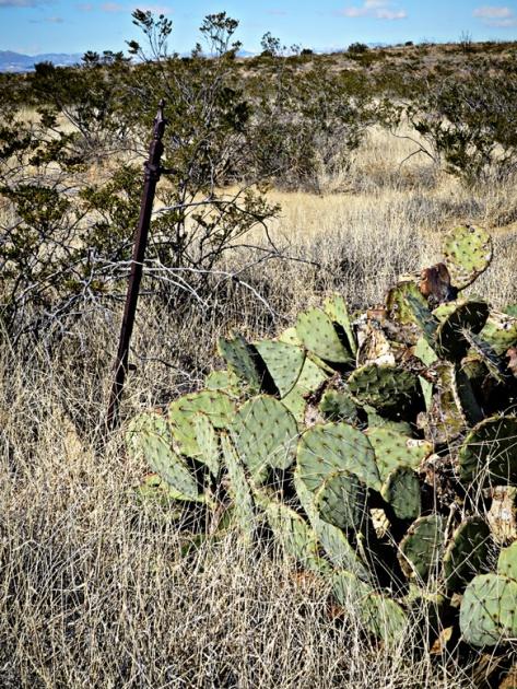 EB grave cactus