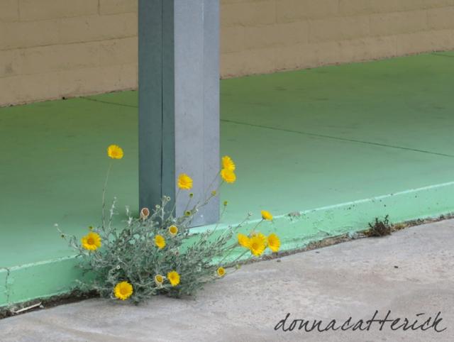 PL flowers 3