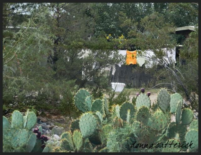 cactus laundry