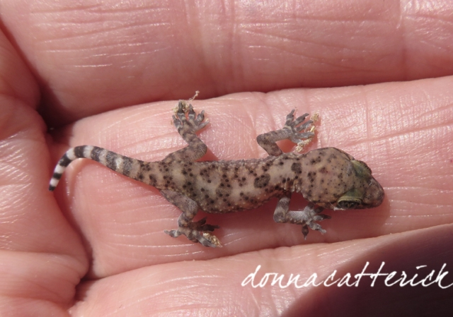little lizard 2