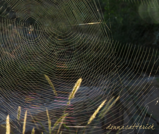 Two webs 2