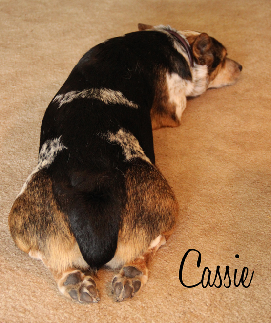 cassie sleep 1