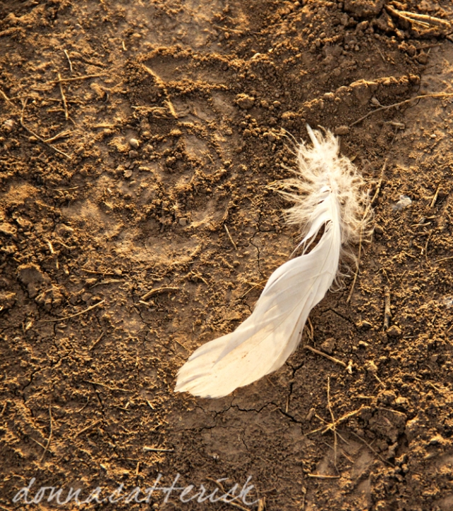 feather and footprint