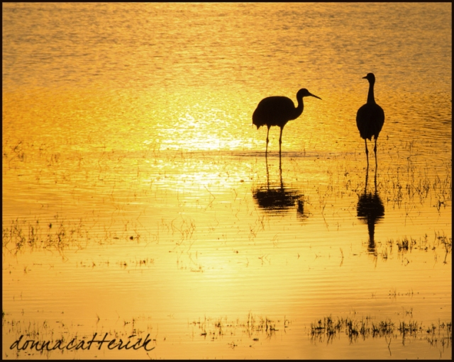 crane silh gold