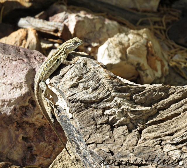 small lizard on rock
