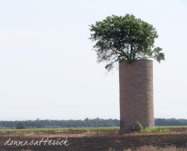 tree in silo 1