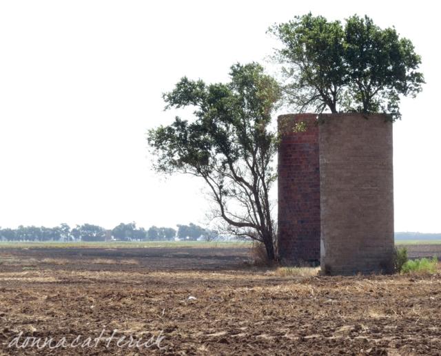 tree in silo 2