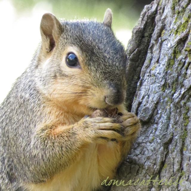 tree squirrel 1