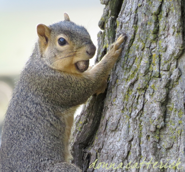 tree squirrel 2