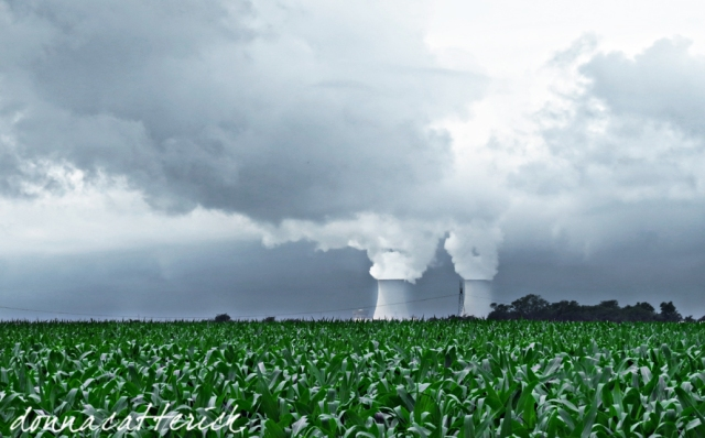 nuclear corn