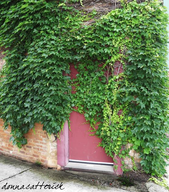ivy door