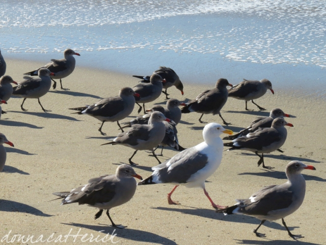 gulls walking