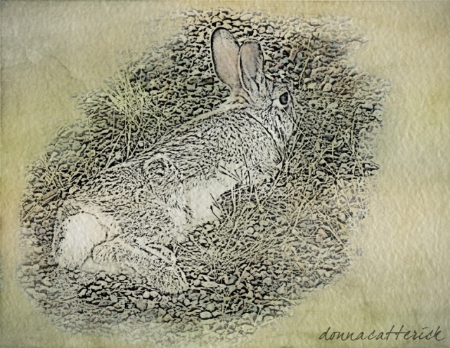 bunny texture