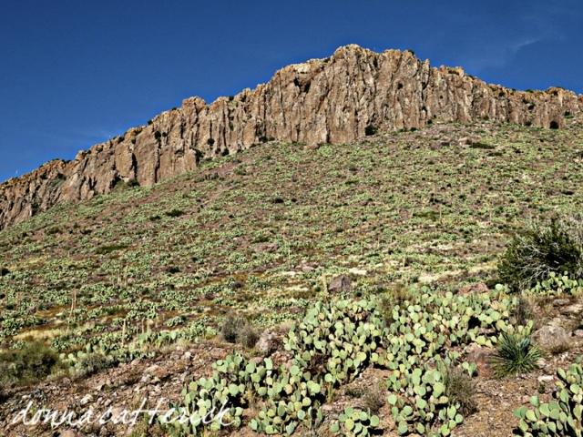 RH cactus slope