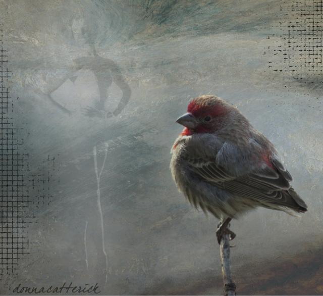 bird ballet