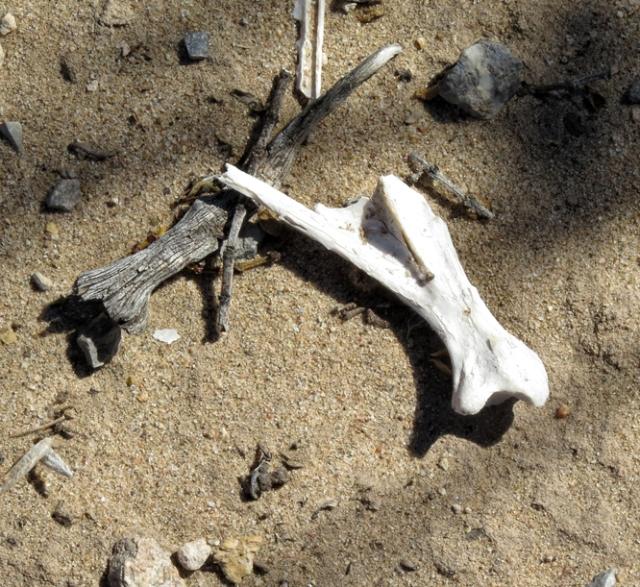 bone texture 1