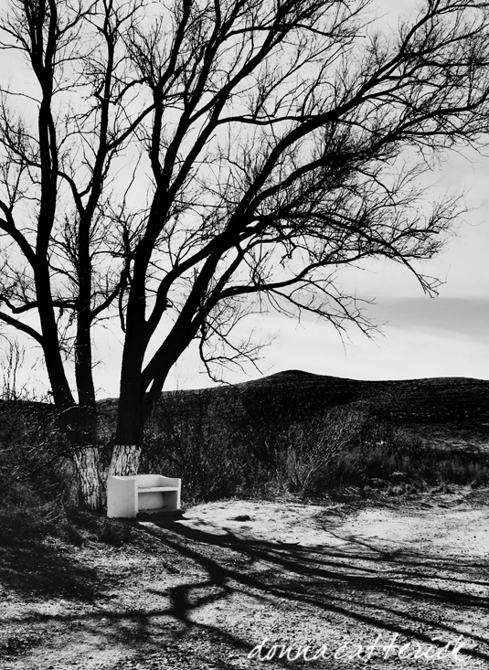 tree bench hueco