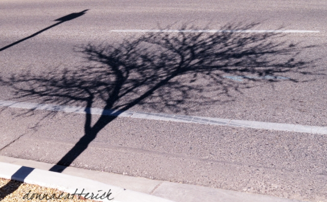 tree shadow 2