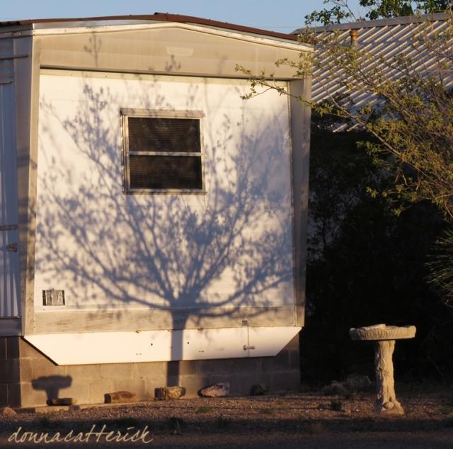 tree shadow 3