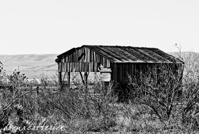 wood shed bw