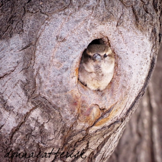bird in tree 1