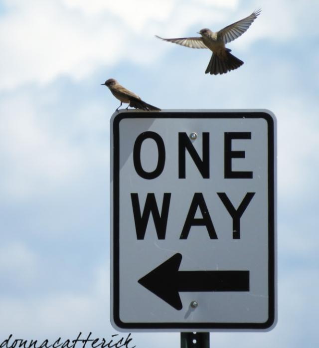 one way birds