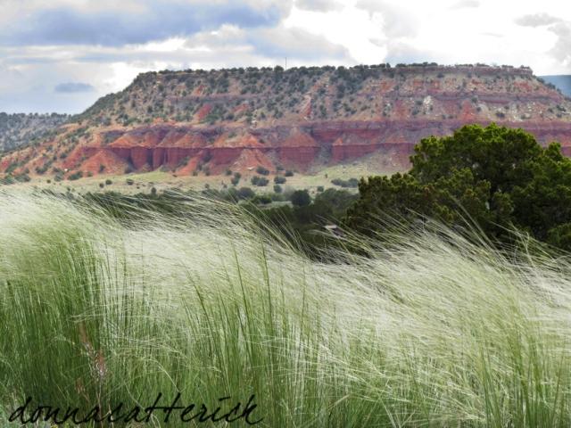 grass mesa
