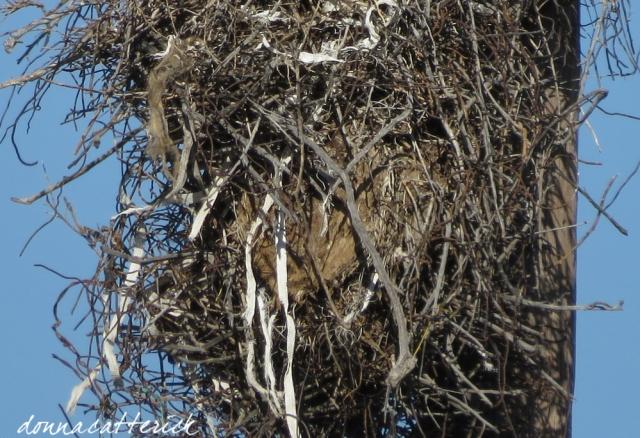 pole nest contents