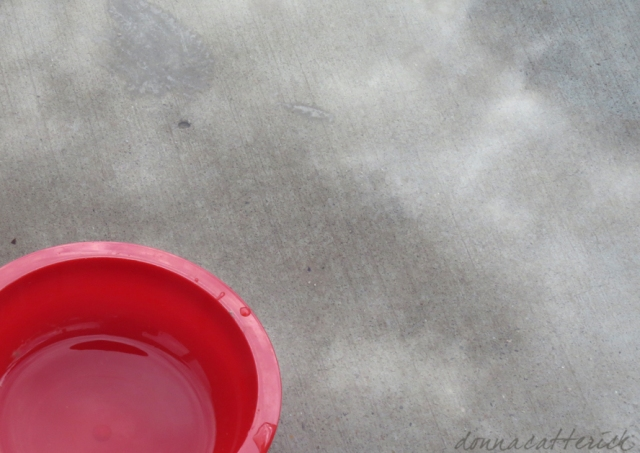 red-bowl-puddle