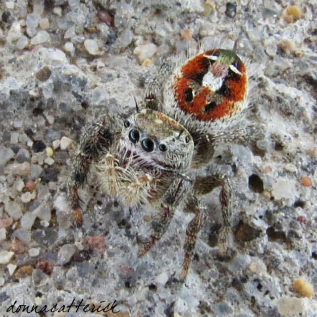 small-spider