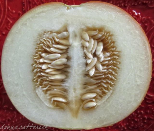 tigger-melon