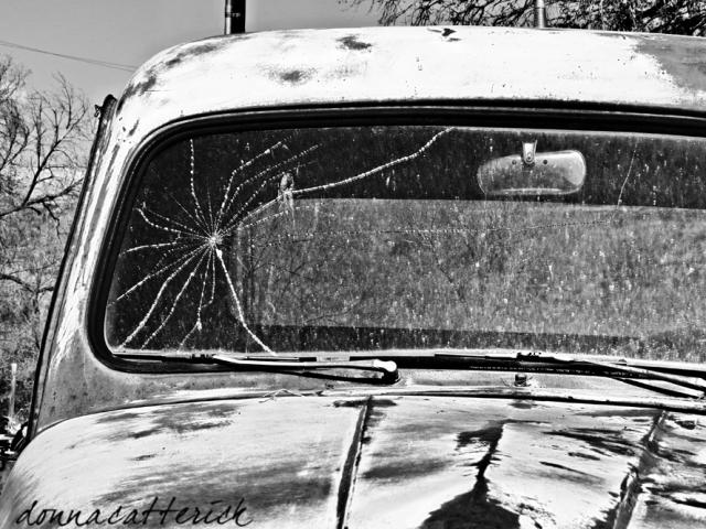 spider-on-windshield